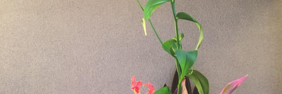 2017 ペンテコステのお花